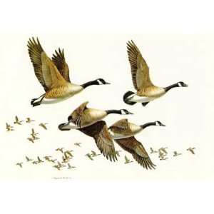 Maynard Reece   Flight Canada Geese: Home & Kitchen