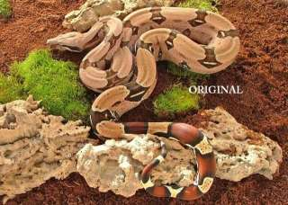 Guyanan Red Tail Boa Cross Stitch Pattern Snakes TBB