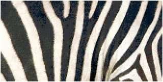 Zebra Stripes Animal Print Counted Cross Stitch Pattern