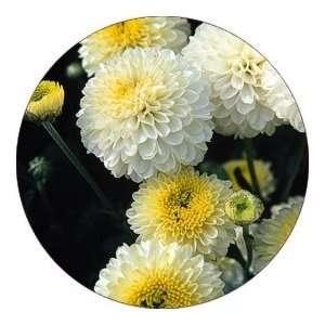 Designer Coasters Flower/Flowers/Floral   (CRFL 703)