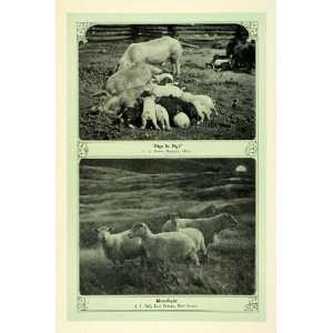 1907 Print Farm Animals Pigs Sheep East Orange NJ